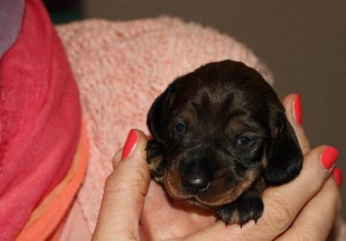 7-5-2015 pup1 noortje 001