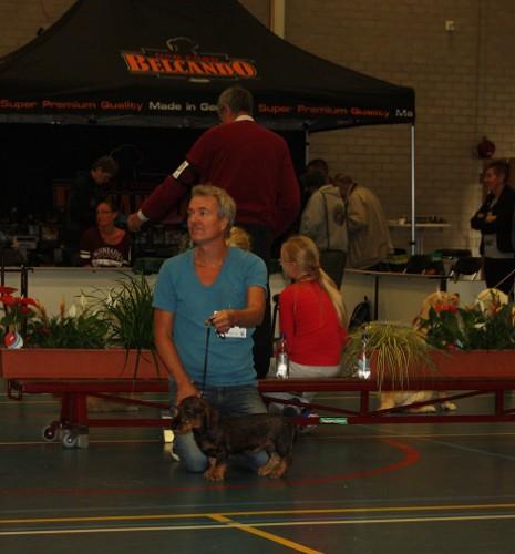 puppy show 3 waalwijk 06-09-15 021